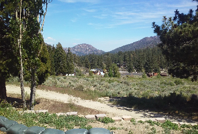 Wrightwood Forest